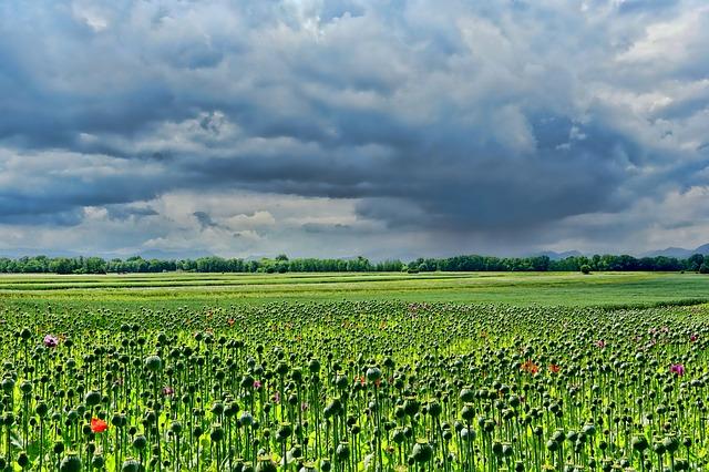 Herbicyd na chwasty dwuliścienne
