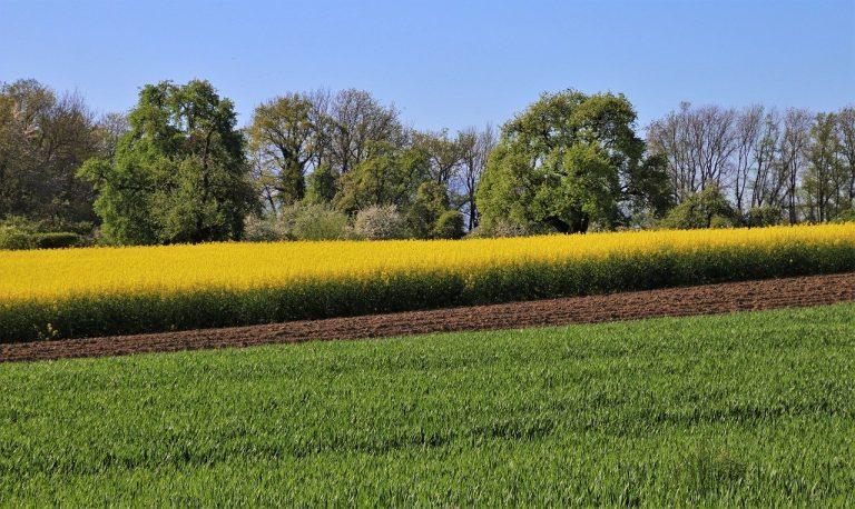 Ochrona roślin przy pomocy środków chwastobójczych